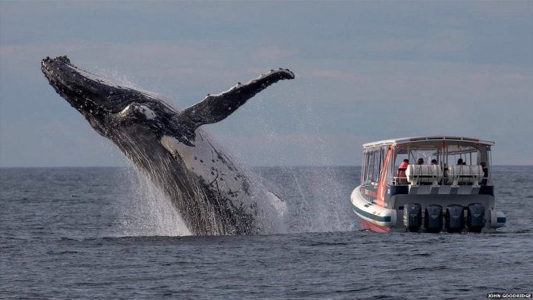 baleia a saltar