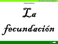 https://cplosangeles.educarex.es/web/edilim/tercer_ciclo/cmedio/las_funciones_vitales/la_funcion_de_reproduccion/la_fecundacion/la_fecundacion.html