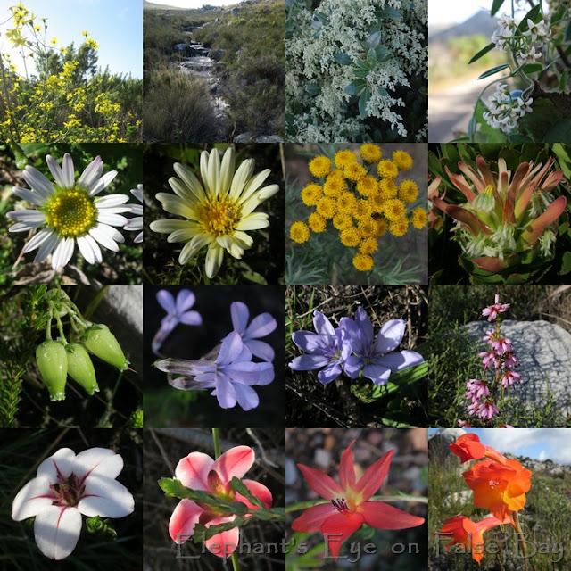 Maiden Peak Silvermine June flowers