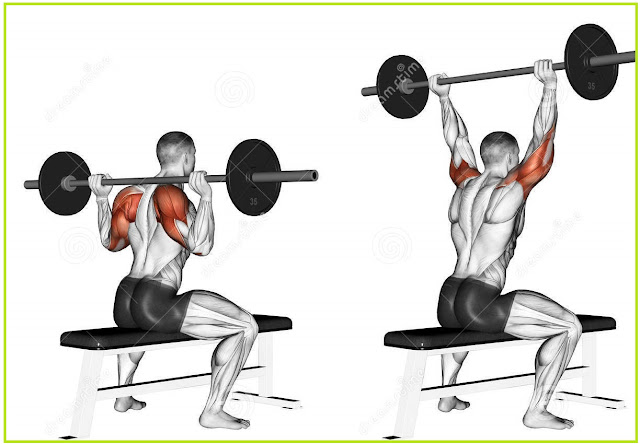 shoulder press machine muscles worked