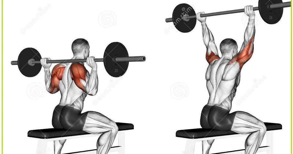 Shoulder Exercises For Men | Basic Exercises For Broader ...