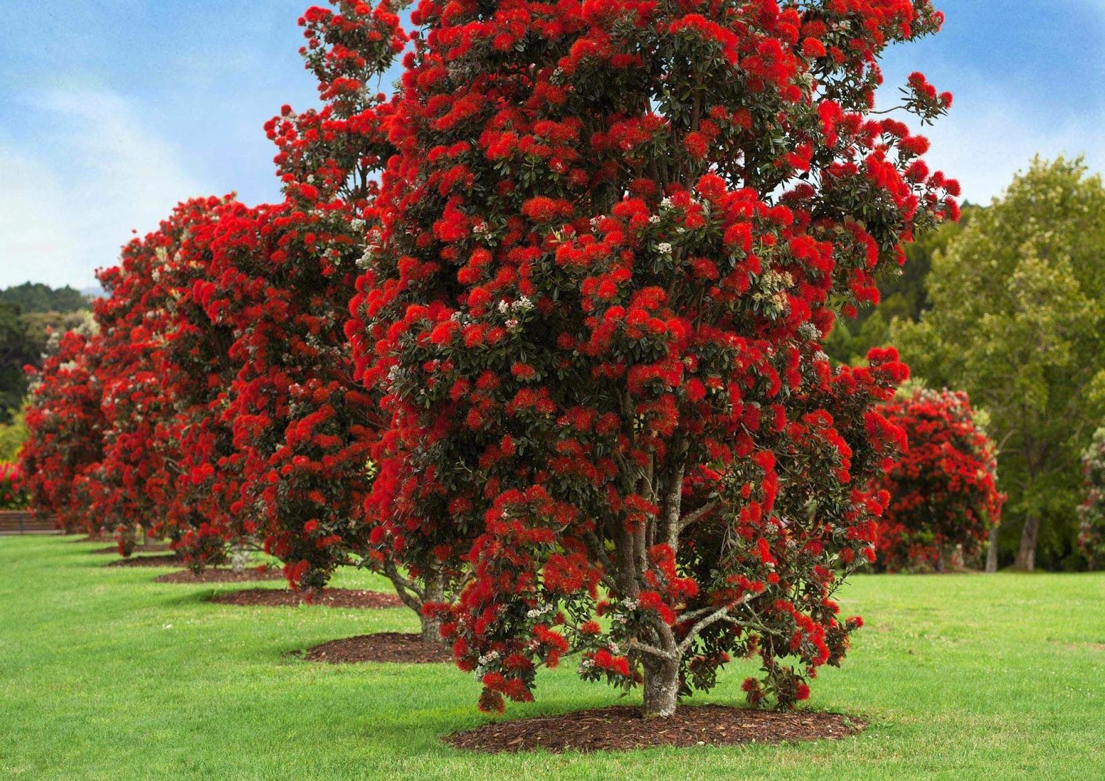 10 Inspirational Botanic Gardens