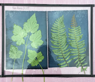 Wet cyanotype, Sue Reno, Image 2