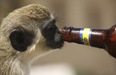 Funny Drunk Monkey Funny And Cute Animals