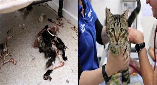 14 Kucing Peliharaan Dikurung Didalam Rumah, Saat Dibuka Petugas dan Sang Pemilik Kaget, Kondisi Kucingnya Sungguh…