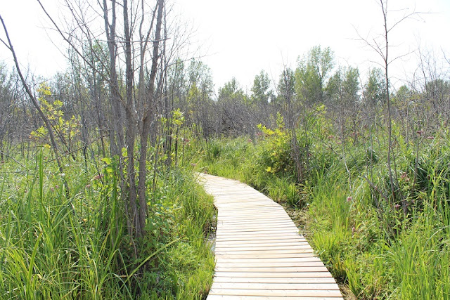 Boardwalk Sprucewoods Park Hiking trail