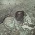 Το σπήλαιο του Αρχέδημου (Βίντεο)