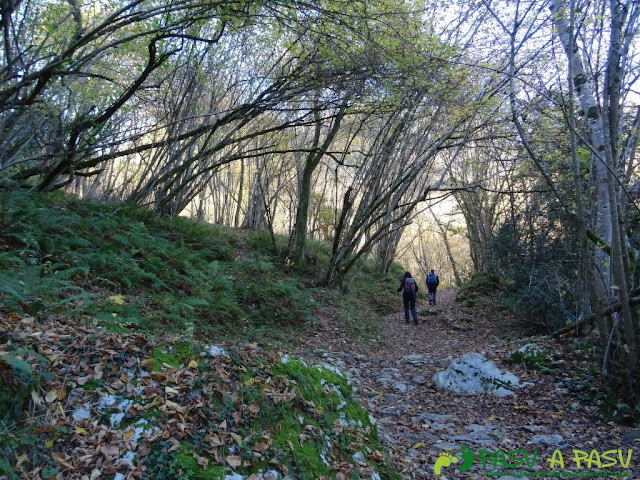 Bosque en la parte alta de la ruta de Beyu Pen