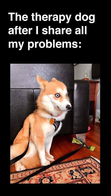 Funny Animal Memes Of The Day
