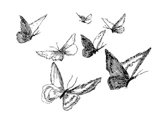 butterfly image artwork drawing illustration digital