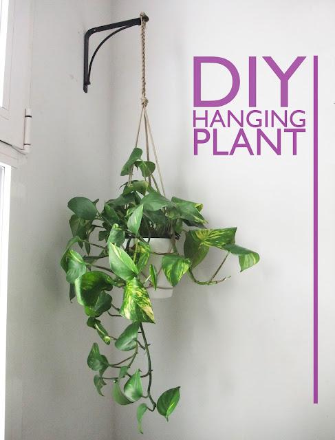 small indoor plants, best indoor plants, DIY hanging plant pothos