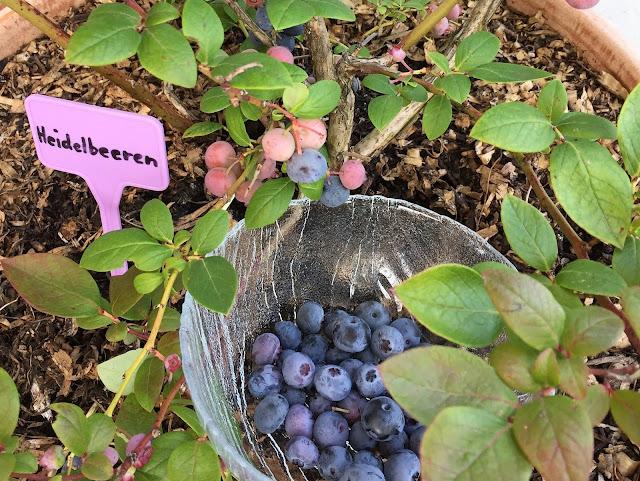 Namensschild der blauen Heidelbeeren