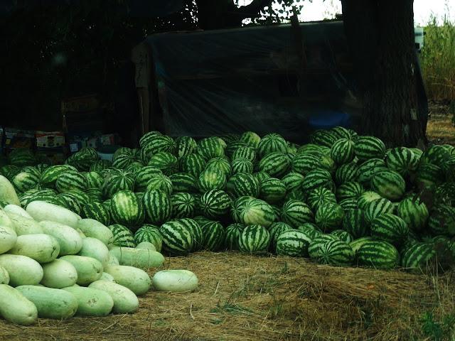 Ukraińskie arbuzy (Odessa/Iliczewsk)