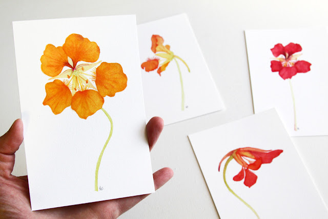 nasturtiums, paintings, watercolor, botanical watercolor, nasturtium watercolor, nasturtium painting, Anne Butera, My Giant Strawberry