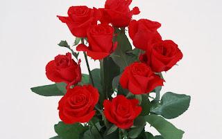 Manojo de rosas