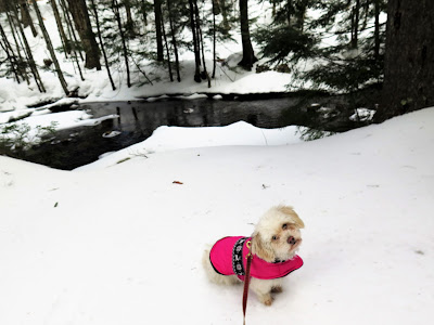 Pet friendly travel in New Hampshire