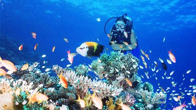 ท่องเที่ยว, แนวหินปะการัง, มัลดีฟส์, สถานที่ดำน้ำ, สถานดำน้ำทั่วโลก, อันดับสถานที่ดำน้ำ, เปอร์โต กาเลรา ฟิลิปปินส์ (Puerto Galera, Philippines)