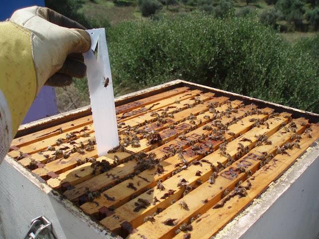 Σημαντική ανακοίνωση: Μαζική καταπολέμηση βαρρόα, για τους μελισσοκόμους Καρδίτσας!