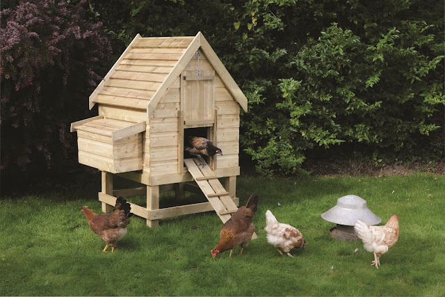 How to build a chicken coop chicken coops designs top for Plans for a chicken coop for 12 chickens