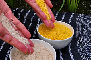 GOLDEN RICE: A BIO-FORTIFIED FOOD