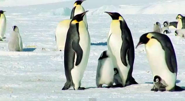 2 PINGUIM BAIXAR HAPPY DUBLADO O FEET RMVB
