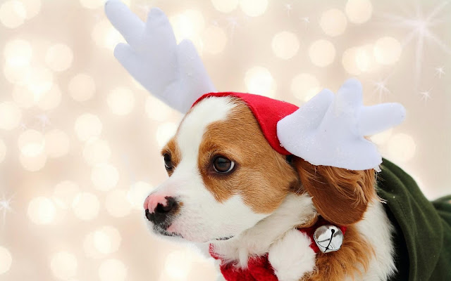 Merry Christmas images with animals