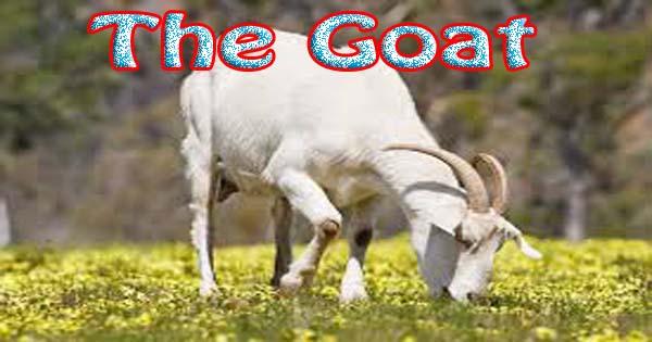 Cow Essay In English Pdf
