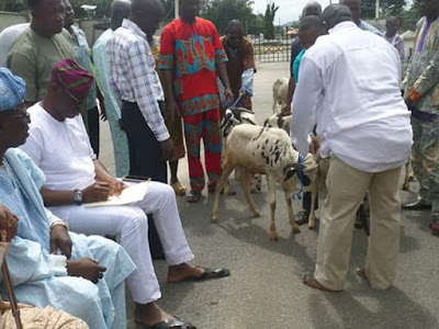 Governor Fayose distributes rams to muslim leaders and urge them to pray for peace in Nigeria