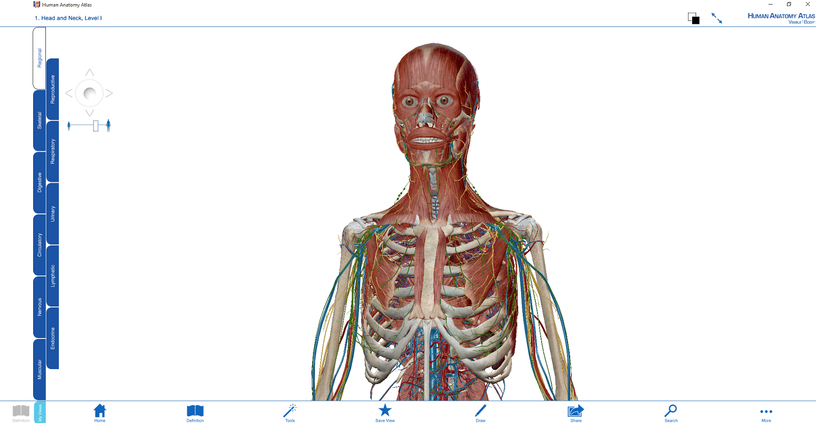 3d Human Anatomy Atlas Visible Body