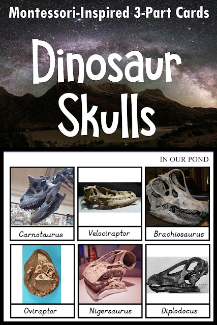 Montessori-Inspired Dinosaur Skulls 3-Part Cards from In Our Pond