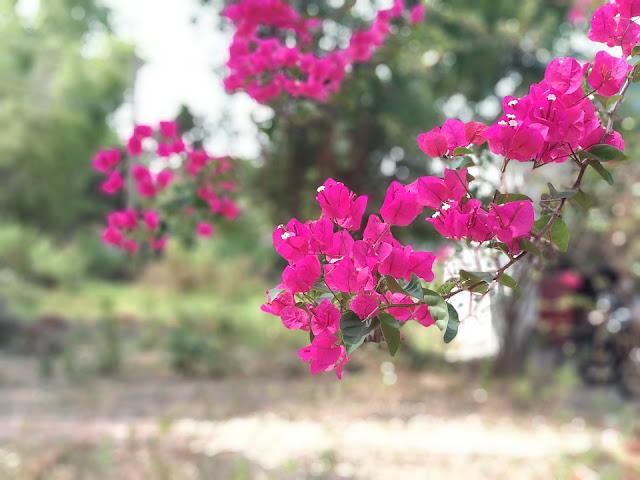 hoa giay dep