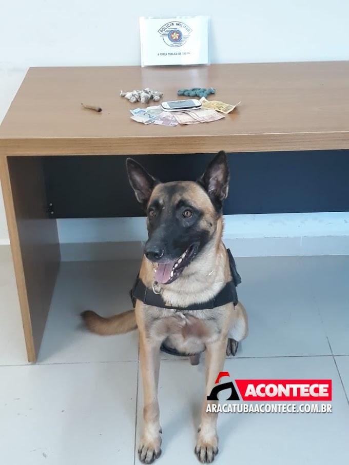 Cão da PM encontra droga durante abordagem a menor no bairro Água Branca