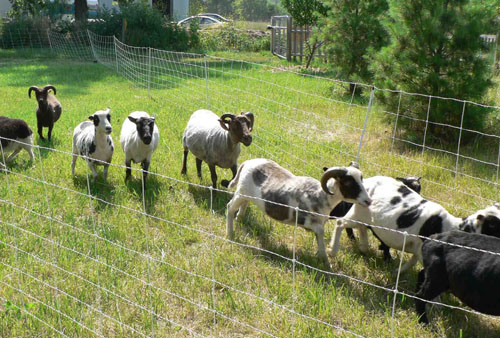 Herding Dog Training Near Vancouver Wa
