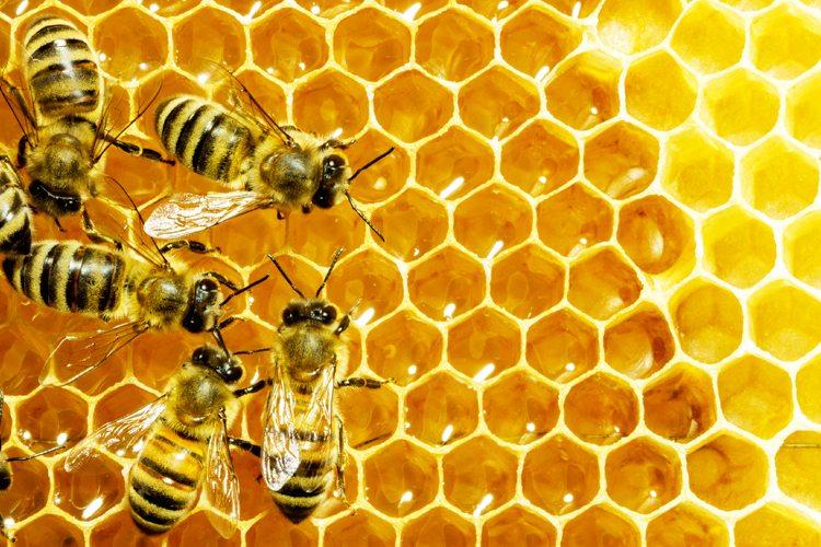 Arılar Toplama ve Çıkarma Yapabilir mi? 2