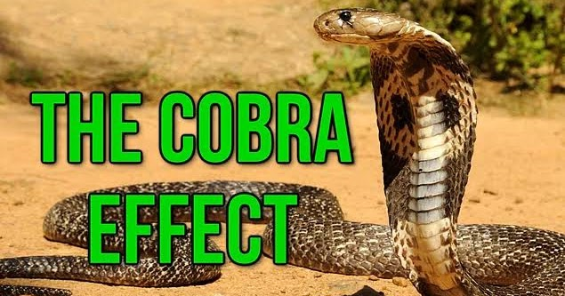 the cobra effect people take the The consolidated omnibus budget reconciliation act (cobra) is a federal law the cobra statute requires employers to offer continuation of group coverage (eg, medical, dental, and vision) to covered employees, spouses, domestic partners, and eligible dependent children who lose group coverage due to a qualifying event.