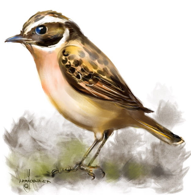Whinchat bird painting by Artmagenta
