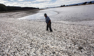 dead zones, dead fish