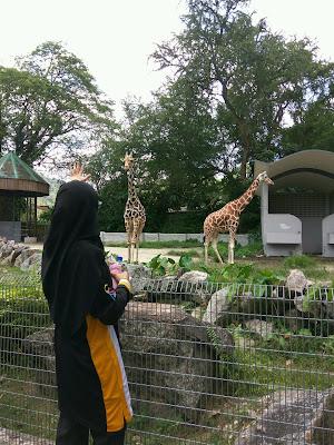 volunteer work di zoo negara, zoo negara, programm di zoo negara