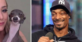 los dobles de los famosos - humor - snoop dog