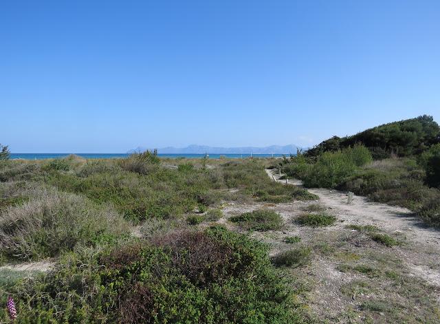 Playa de Muro Steg, Mallorca