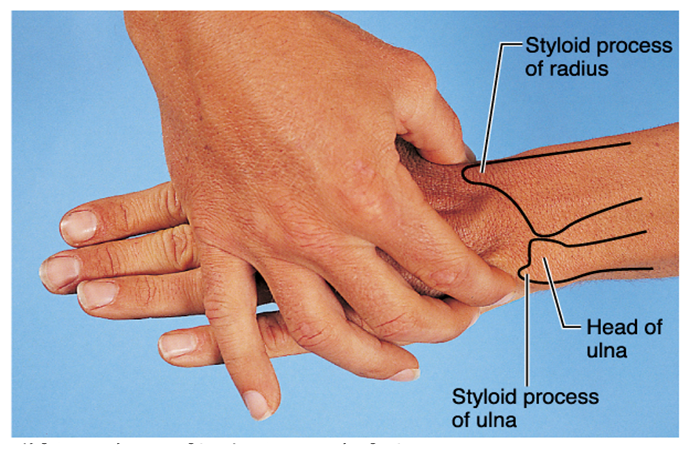 how to remember blood supply of upper limb