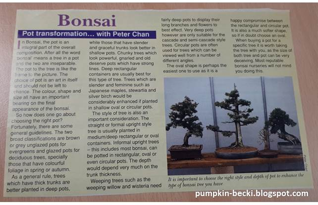 Bonsai article written Peter Chan Amateur Gardener magazine 1989