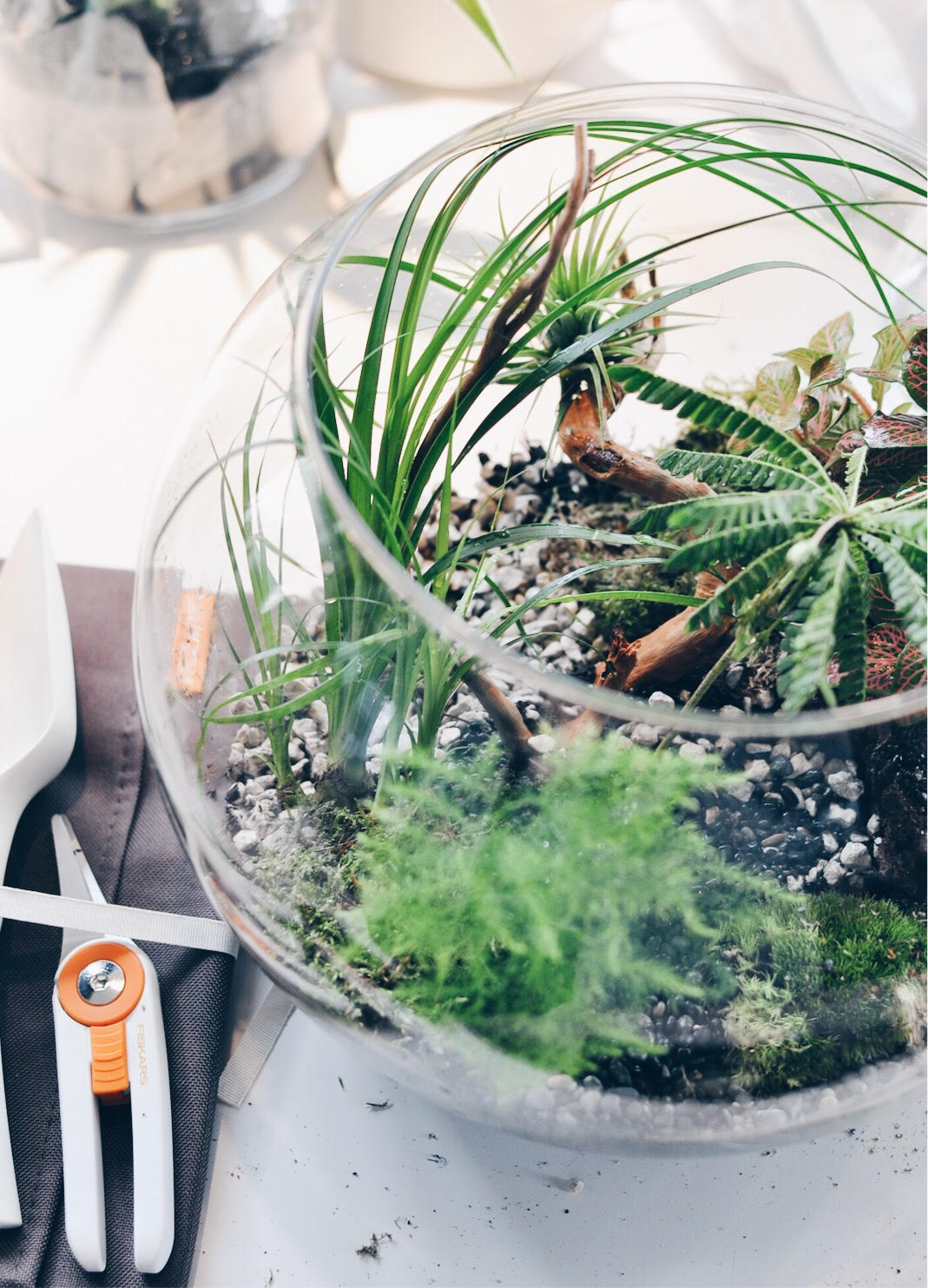 terrarium, DIY terrarium, make your own terrarium, SkyGarden, Terrarium supplies, Fiskars, Glass terrarium containers, Gardening DIY, DIY Garden ideas, Garden Projects, Urban jungle, DIY garden decor