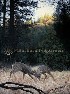 fine art painting of two rutting deer in a mountain meadow, created by Barbara Ivie Green