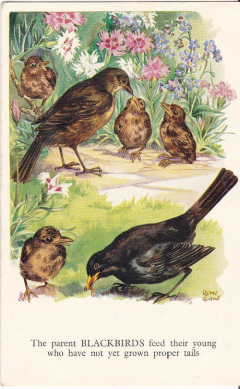Rene Cloke Postcard Blackbirds