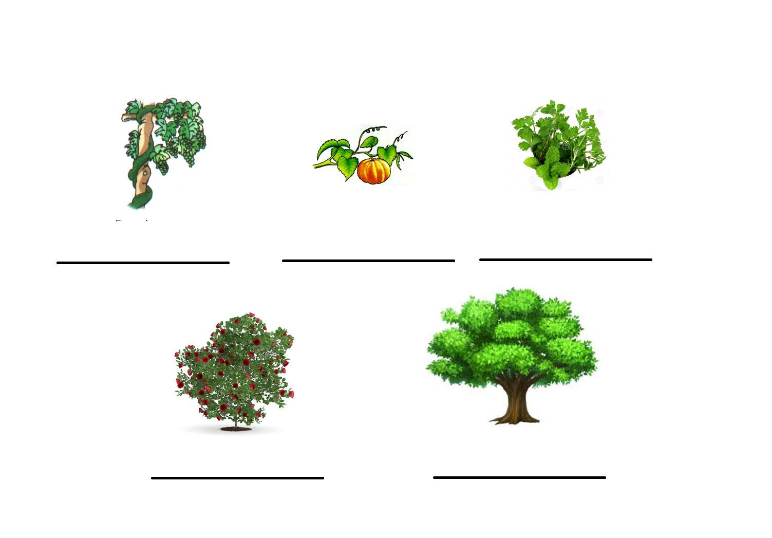 type of plants garden design ideas. Black Bedroom Furniture Sets. Home Design Ideas
