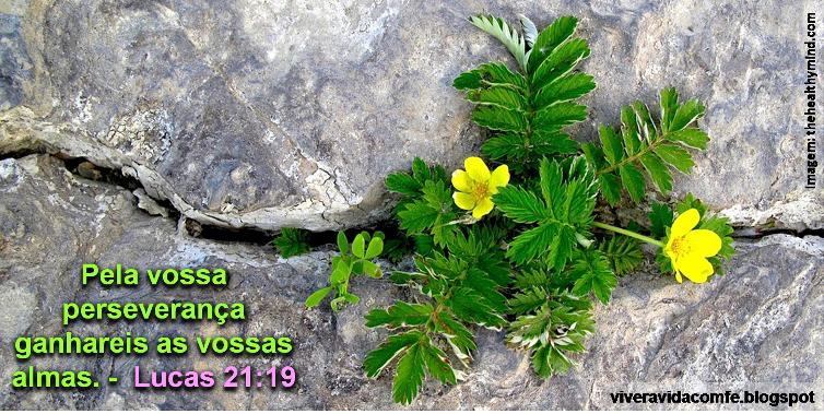 Mensagens E Palavras De Fé: Mensagens De Fé Da Palavra De Deus: Mensagem Biblica Sobre