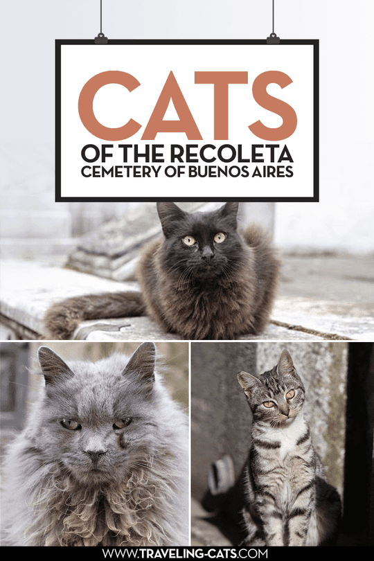 cats of the recoleta cemetery