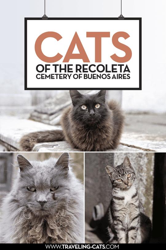 cats of the recoleta cemetery