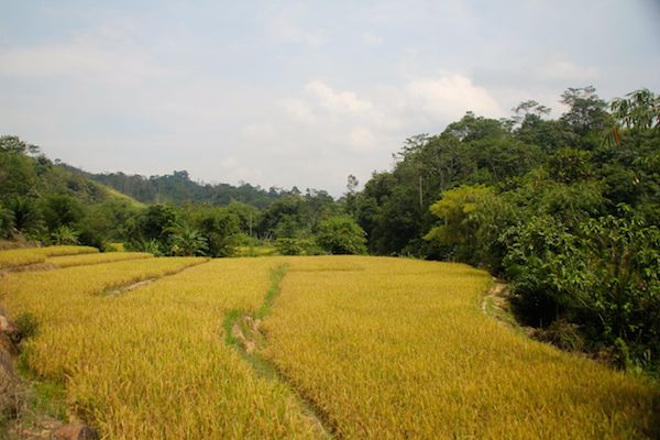 community forestry in Indonesia